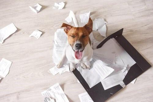 3 Tipps, damit dein Hund in deiner Abwesenheit nicht das Haus zerstört