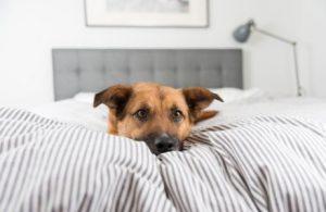 Warum will mein Hund nicht in seinem Bett schlafen