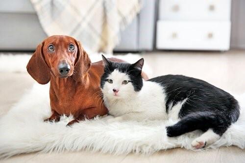 Warum wir alle eine Katze haben sollten - Hund und Katze