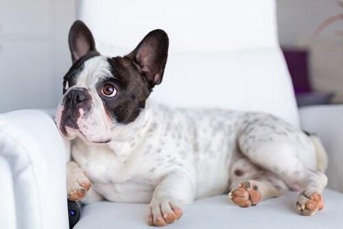 Was sehen Hunde wenn sie fernsehen?