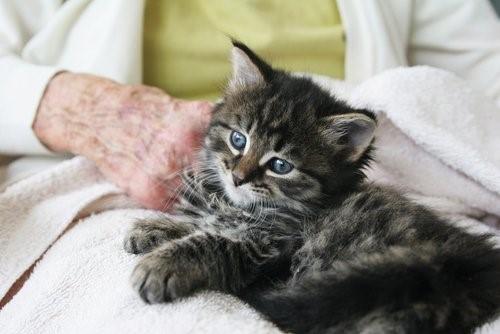 Wie Katzen unser Leben verändern - kleines Kätzchen