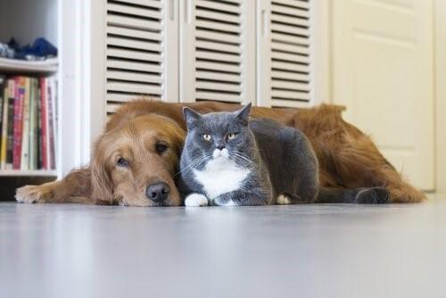 Wie alt ist deine Katze in Menschenjahren - Katze und Hund