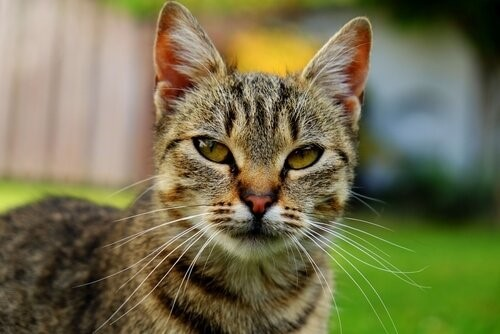 Wie alt ist deine Katze in Menschenjahren?