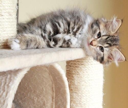 Wie du verhindern kannst, dass deine Katze deine Möbel zerkratzt