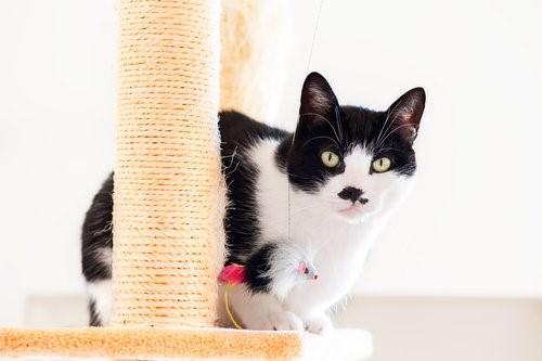 Wie du verhindern kannst, dass deine Katze deine Möbel zerkratzt - Katze auf Kratzbaum