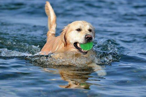 Bring den Ball aus dem Wasser!