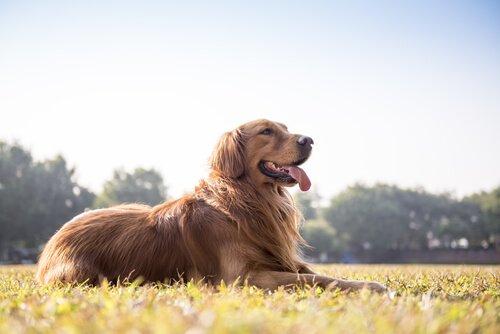 Wie du am Stuhl erkennen kannst, ob dein Hund gesund ist