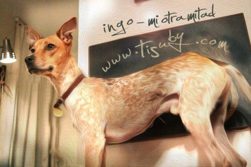 Venezolanische Sängerin schreibt tolles Lied für Hunde