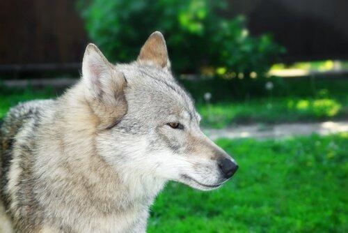 Wissenswertes über Hunde