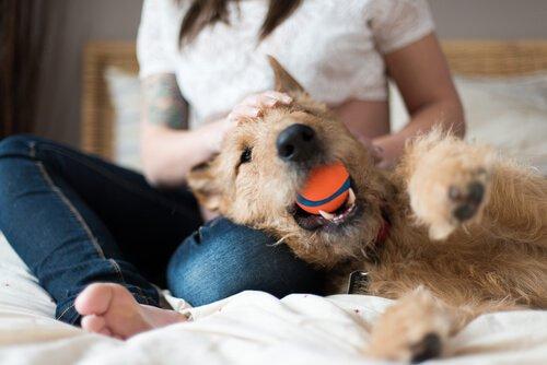 Gib mir den Ball zurück!