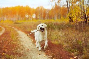 entspannender Augenblick beim Spaziergang mit Hund