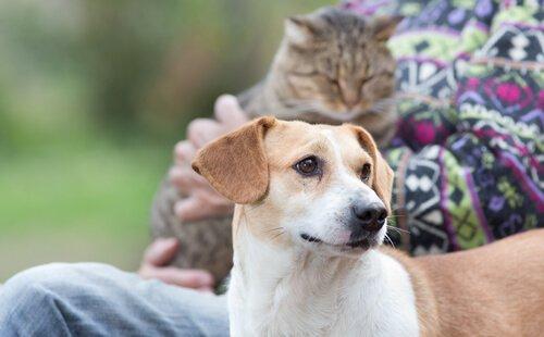 Kommunikation mit Hund und Katze