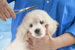 Hund muss zum Friseur