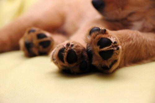 Maniküre bei Hunden