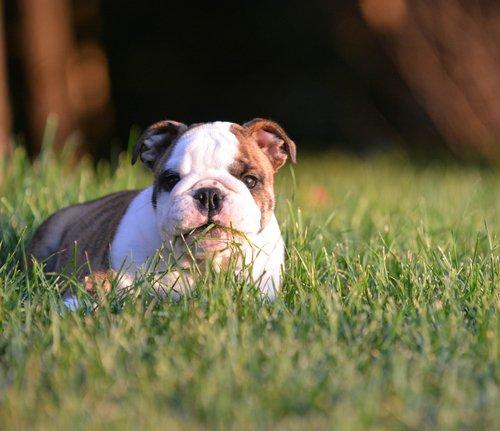 Hunde mögen Gras