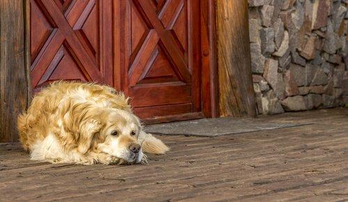 Was tun, damit sich dein Hund nicht im Dreck wälzt?
