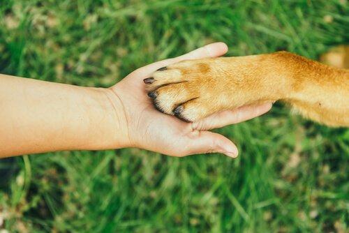 Maniküre für den Hund