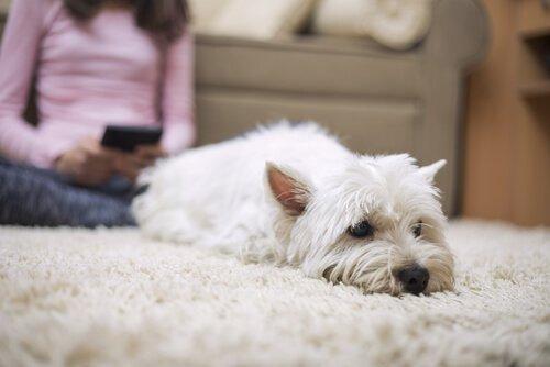 Können Hunde auch frieren wie Menschen?
