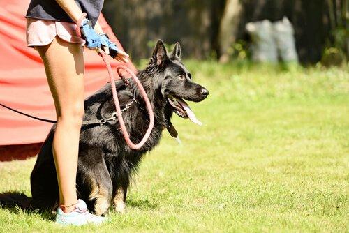 Hund kann dich vor schlechten Freundschaften retten