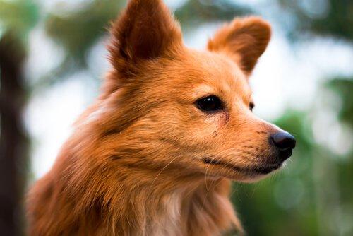 Das Hundehoroskop: die ersten sechs Sternzeichen