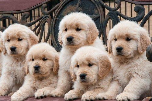 Warum gibt es so viele Hunderassen auf der Welt?