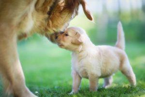 Hundewelpen mit Mutter