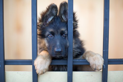 Stadt, in der nur noch ausgesetzte Hunde verkauft werden