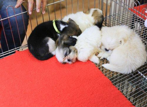 Entdecke, in welcher Stadt man Hunde nur adoptieren kann