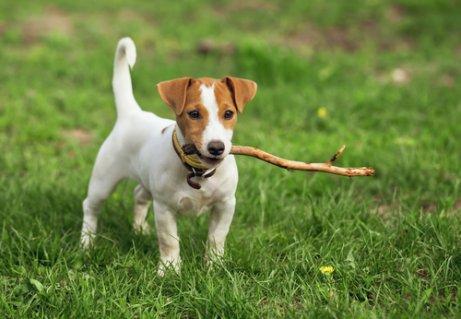 Interessante Namen für kurzhaarige Hunde