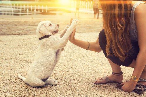 Kann ein Hund tatsächlich linkspfotig sein?