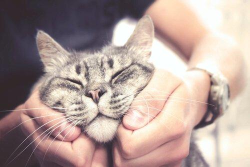 Katze und Mensch sind sich ähnlich