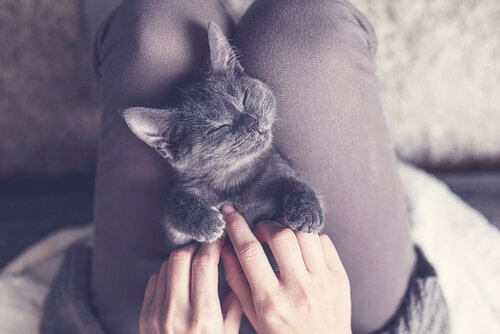 Acuh Katzenkinder lieben Streicheleinheiten