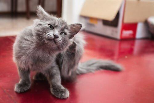 von Katzen übertragbare Krankheiten