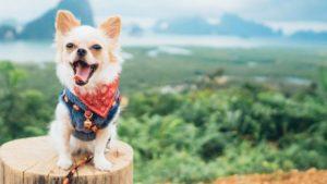 kleiner Hund mit Charakter
