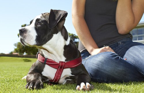 Ein Hund fördert deine körperliche und seelische Gesundheit