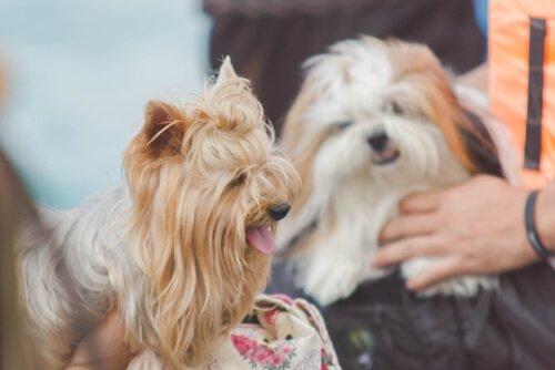 Kommunikation zwischen Haustier und Mensch