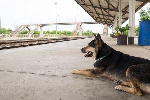 Auch hier gibt es ein Monument für Straßenhunde