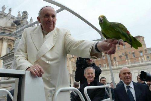 Papst Franziskus und seine Beziehung zu Tieren