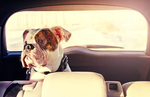 Reisezeit: Wie kann man verhindern, dass es dem Hund im Auto schlecht wird?