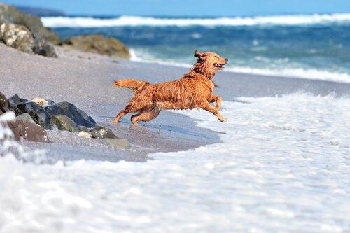 So viel Spaß am Strand!