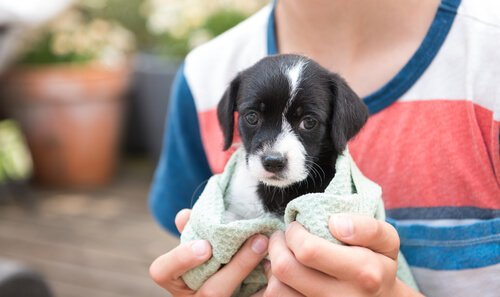 Das Ziel der Stadt San Francisco: nur ausgesetzte Hunde zu verkaufen