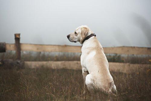 Monument erinnert an das Schicksal ausgesetzter Tiere