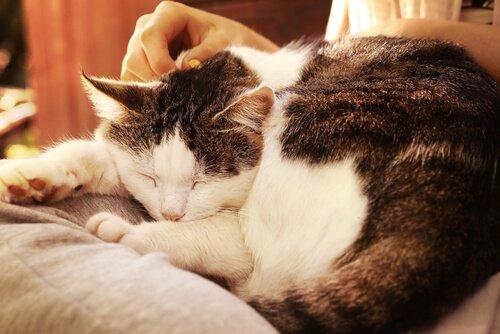 Streicheleinheiten für die Katze