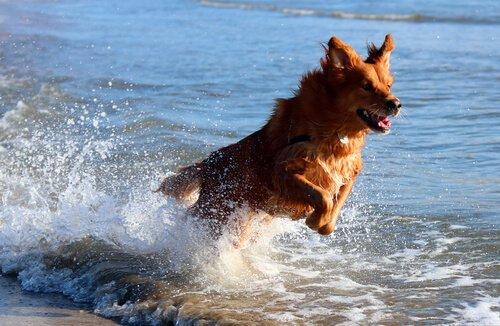 Am Strand mit dem Hund - ein genialer Spaß