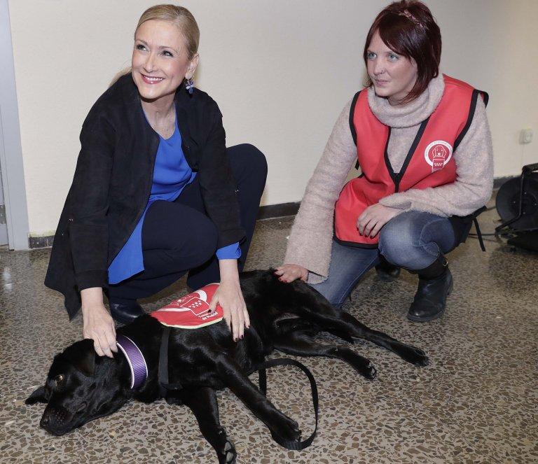 Hundetherapie unterstützt viele Menschen
