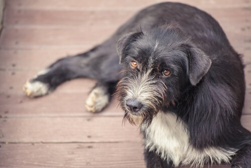 Verhütendes Futtermittel für Straßenhunde