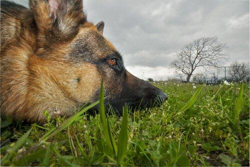 Giftige Pflanzen für unsere Hunde