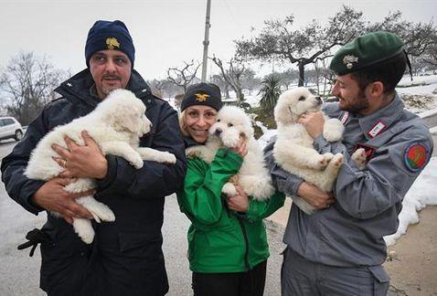 Drei Welpen wurden nach Erdrutsch in Italien aus einem Hotel gerettet