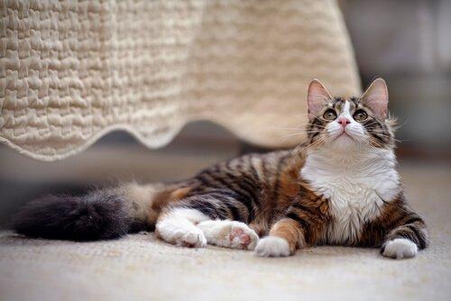 Wie man am besten eine Katze zuhause hält