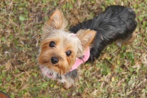 6 grundlegende Dinge über den kleinen Hund